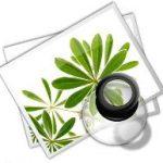Аллергия на пыльцу - лечение народными средствами