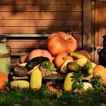 """Полезные свойства тыквы - """"сказочная карета"""" полная витаминов"""